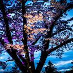 Spring Lights Illumination photo by Hannah Munday