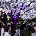 Spring Lights Illumination photo by Oliver Hansen