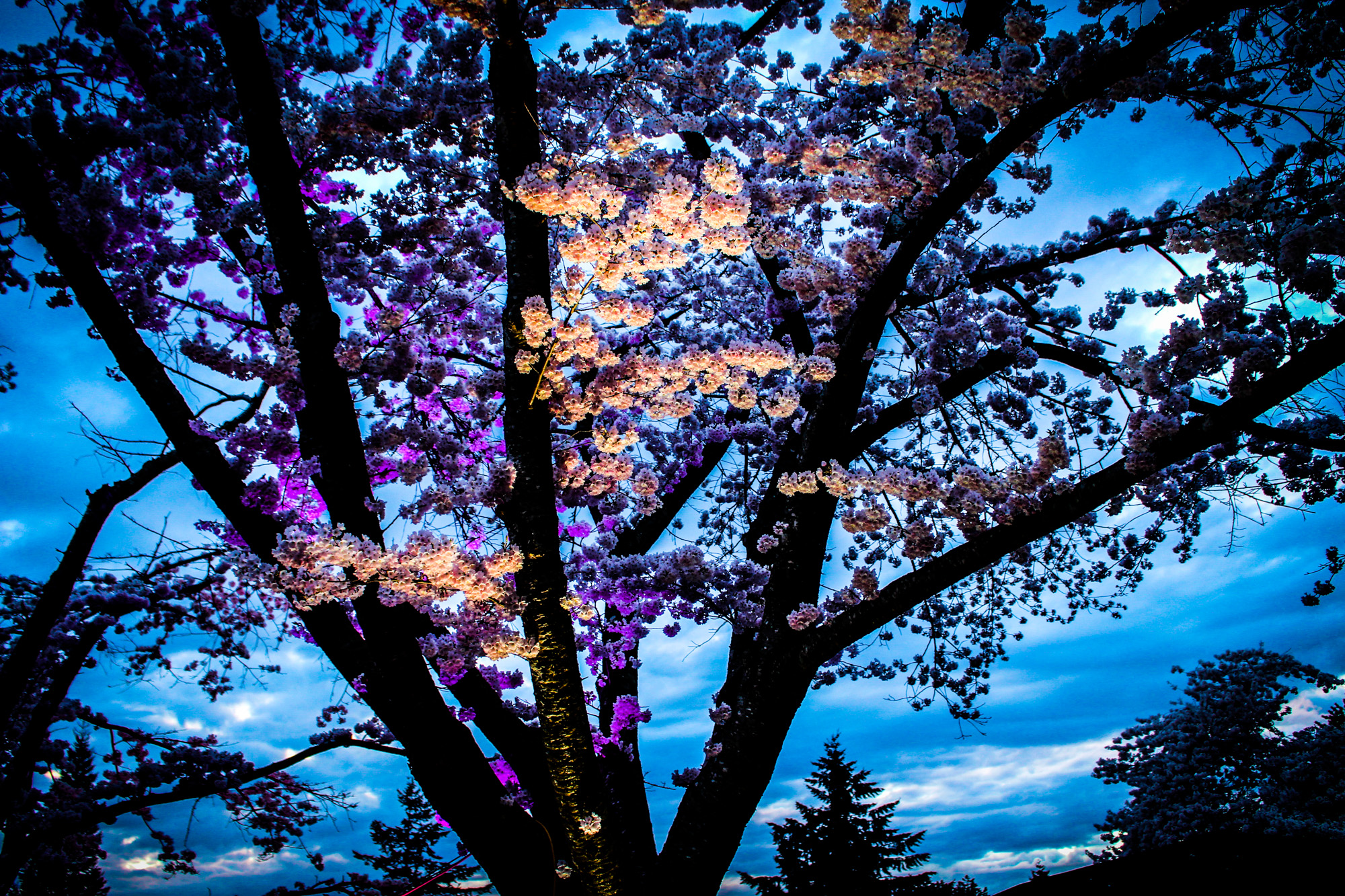 Spring Lights Illumination photo by Hannah Munday