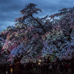 Spring Lights Illumination photo by Oliver Hansen